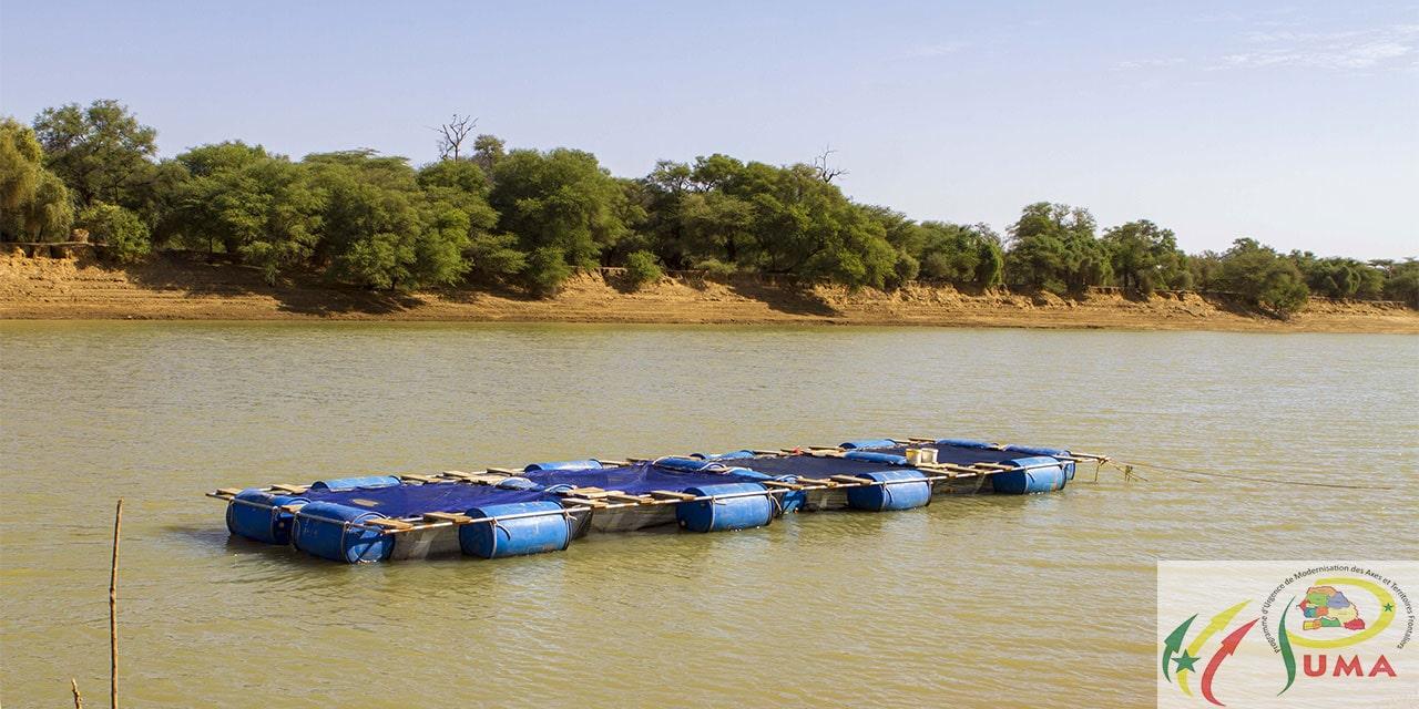 Cages flottantes à  Guédé chantier, Podor