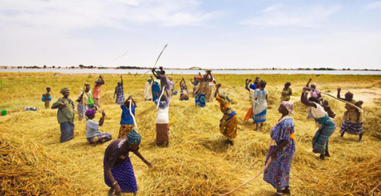 Podor – Autonomisation des femmes : L'Association «Naforé» de Mboumba citée en exemple
